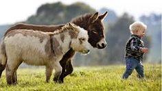 Bildresultat för åsna