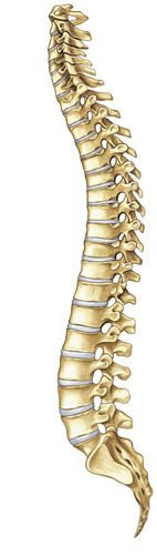 Your Back and Leg Pain with Lumbar Spinal Stenosis | Paradigm Spine