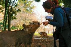 Cervi nel parco di Nara - Giappone http://www.chicksandtrips.net/parco-di-nara/