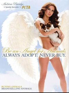 adopta nunca compres