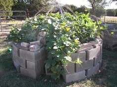 Keyhole garden, keyhole, mandala garden, permaculture, Deb Tolman, Dr. Deb Tolman, raised garden bed