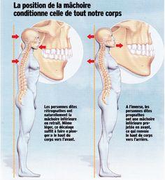 Anatomy Bones, Head Anatomy, Psoas Iliaque, Postural, Self Defense Martial Arts, Posture Exercises, Spine Health, Medical Anatomy, Muscle Anatomy