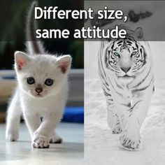 The smaller they are the fiercer they are.