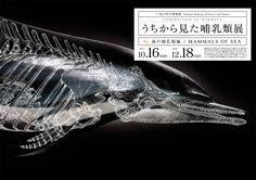 うちから見た哺乳類展 by 吉田航