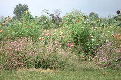 A wild flower garden..