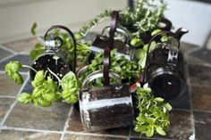 Jars and Small-Space Gardening!