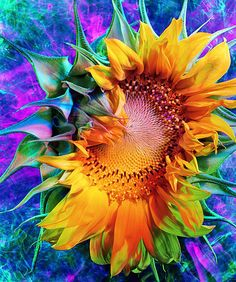 sunflower Pinterest Pin-a-Way by http://www.JoannaMaGrath.com
