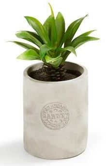 This cute little artificial plant from Kmart http://www.kmart.com.au/category/home/shop-by-category/home-accessories/artificial-flowers/252016