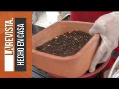 ¿Cómo transformar un árbol a Bonsai? - YouTube