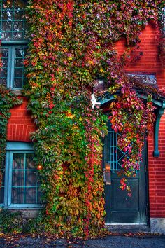 Ivy growing on one of the beautiful buildings at McGill University, Montreal, Canada Plan Montreal, Montreal Ville, Montreal Quebec, Quebec City, Beautiful Buildings, Beautiful Places, Ivy Wall, Fall Vacations, Voyager Loin