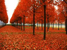 Rows of Autumn Trees [1600x1200] - See more on Classy Bro