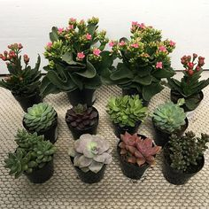 Plants are cool but obsessed with #succulents this spring #succulent #cactus #succulentgardening #propagatingsucculents 25 Types of Succulents & How to Grow It for Beginners