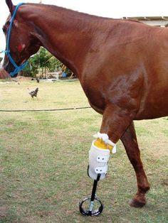 Horse with prosthetic leg Amazing
