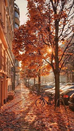 Fall Wallpaper, Trendy Wallpaper, Locked Wallpaper, Pretty Wallpapers, Screen Wallpaper, Nature Wallpaper, November Wallpaper, Beautiful Wallpaper, Fall Pictures