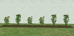Mod The Sims - Garden Plant Gussy Up