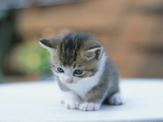 baby-cat-Wallpaper-1.jpg (1024×768)