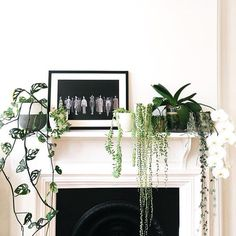"""163 Likes, 5 Comments - @marmosetfound on Instagram: """"Plant love 🌿🌿 @detailmc your mantle is 👌🏻👌🏻👌🏻 spotted on @simple.form"""""""