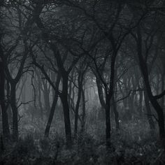 I'll be touring the #BlackForest October/November 2013. 'Bringing back eerie tales!