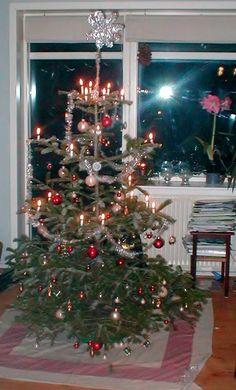 Christmas tree, Christmas 2005, Denmark.