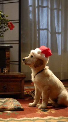 Merry Christmas Dog, Christmas Animals, Xmas, Pet Dogs, Dogs And Puppies, Dog Cat, Doggies, Santa's Little Helper, Christmas Pictures