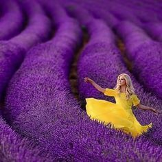 Complementary Harmony: Lavender and yellow