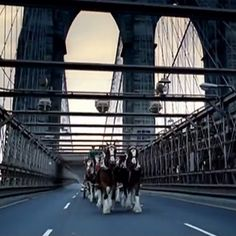 During the 2002 Super Bowl, Budweiser ran a somber one-minute commercial featuring a horse-drawn Budweiser wagon traveling across the country to pay tribute to the victims of 9/11 in front of New York City's skyline. They only intended to air it once.