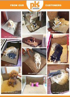 4459327c26254 9 Best Dog Bed Ideas images   Bed ideas, Dog beds, Pets