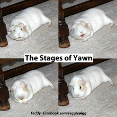 The Stages of Yawn!
