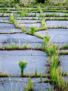 #nature reclaims her ground. closed wiscassett mills, albemarle, #nc. sherryjordanart.com