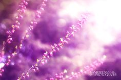 spring, pink, love, flower, light, photography