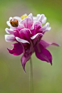 ladybug on pink and Beautiful gorgeous pretty flowers