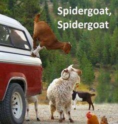 spidergoat :D