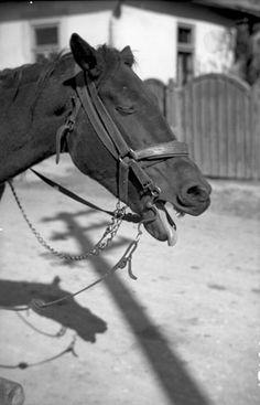 Származási helye » Helység: Csíkrákos (Racu) » Megye: Hargita (Harghita)  Készítés ideje: 1959 Készítette: Vámszer Géza Lelőhely: Kriza János Néprajzi Társaság fotóarchívuma Horses, Animals, Animales, Animaux, Animal, Animais, Horse