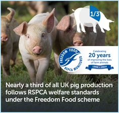 Nearly a third of all UK pig production follows RSPCA welfare standards under the Freedom Food scheme.