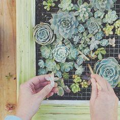 Framed #succulent #garden