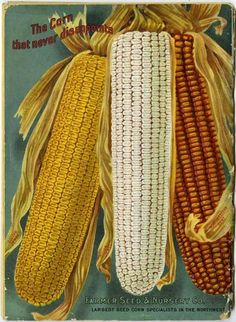 "Three ears of ""the corn that never disappoints"" fill the space on the back cover of the 1914 Farmer Seed & Nursery Co. catalog.  Golden Jewel, Silver Jewel, and Northwestern Dent are the varieties beautifully rendered and marketed for sale here.  Farmer Seed & Nursery originated in Faribault, MN in 1888. Andersen Horticultural Library hosts a collection of vintage Farmer Seed & Nursery catalogs."