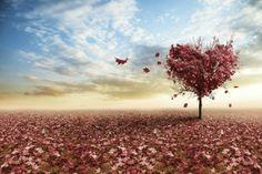 10-misterios-del-amor-explicados-por-la-ciencia-1.jpg (630×420)