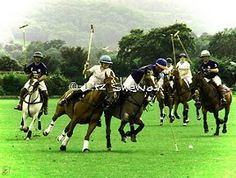 Great action.  © Liz Shewan, Photographer. #polo #equine #horse