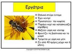 Bugs And Insects, Preschool Activities, Kindergarten, Healing, Bees, Montessori, School Ideas, Spring, Kindergartens
