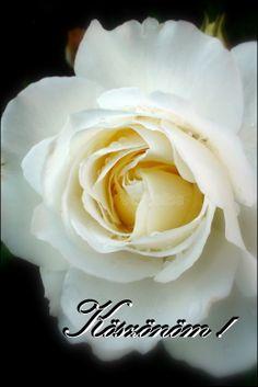 Köszönöm ♥HALAS VAGYOK ISTENNEK AMIERT TEEEE!!!!! VAGY NEKEM.Barhol is legy most. Holiday Gif, Birthday Wishes, Thankful, Sweet, Flowers, Plants, Candy, Special Birthday Wishes, Plant