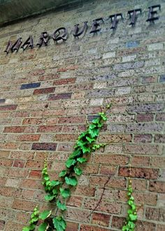 Ivy climbs the southwest wall of Marquette Hall at Marquette University.