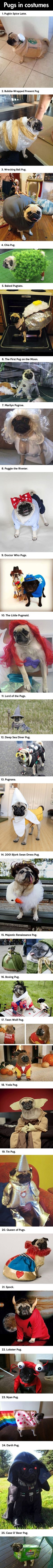 Top 25 Pugs In Costumes