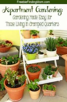 Apartment Gardening - Even with limited space you can enjoy a bounty of delicious fruits, vegetables and herbs. Find out how to make the most of your cramped quarters with these DIY gardening tips. Backyard Garden Landscape, Rooftop Garden, Garden Plants, Garden Landscaping, Indoor Plants, Fruit Garden, Potted Plants, Big Backyard, Tropical Garden