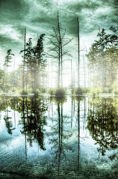 ✯ Foggy Lake