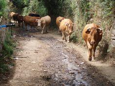 Galicia Camino Frances