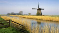 schermerhorn_holland