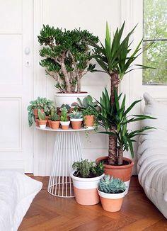 40 Smart Mini Indoor Garden Ideas - Bored Art