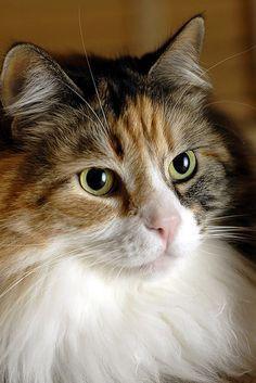Bela gata, olhos verdes!