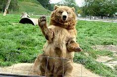 10 Bears Waving At You