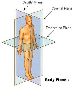 Seer Training Modules Lots of Anatomy & Physiology Info Frontal (coronal) plane Transverse (horizontal) plane Sagittal plane